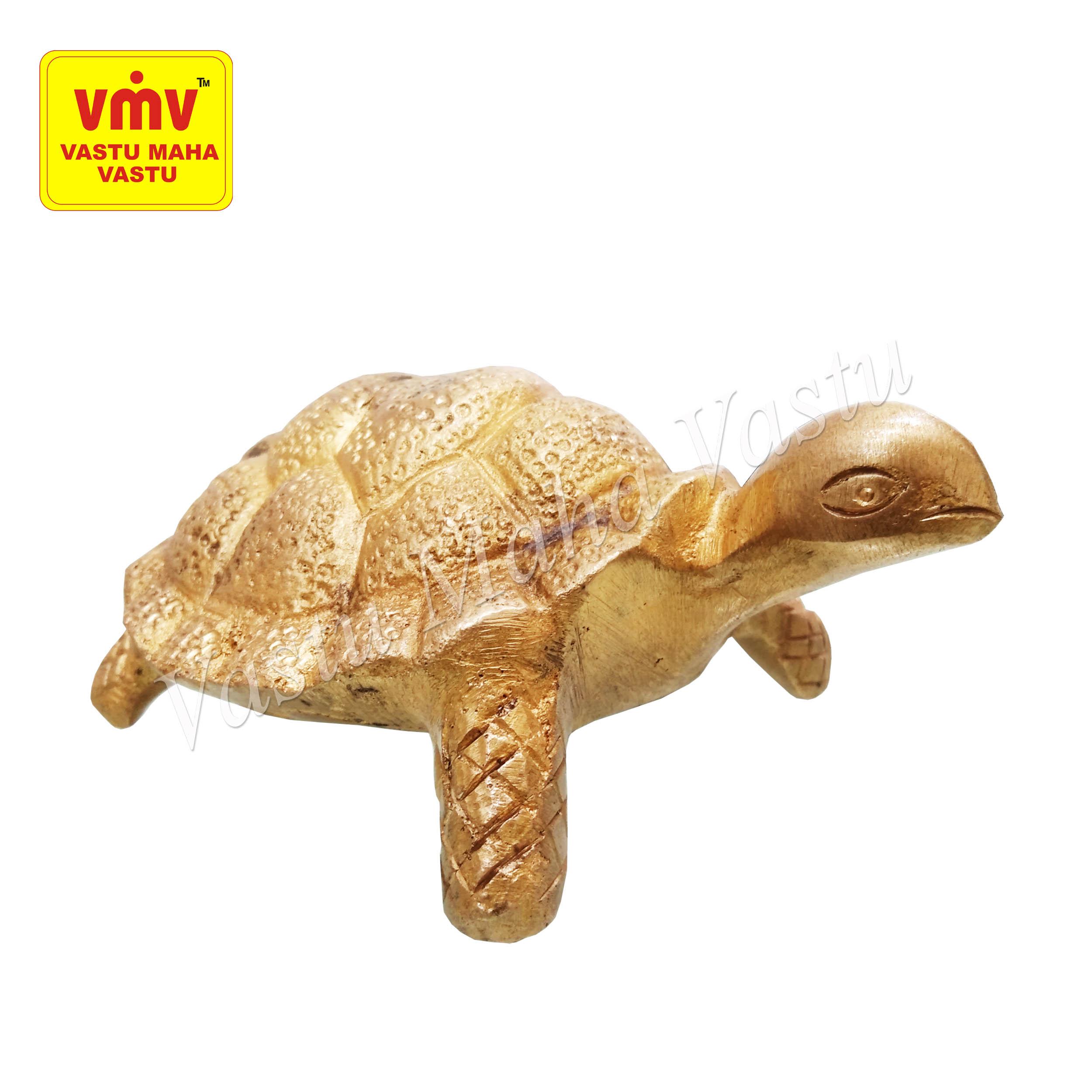Tortoise Big